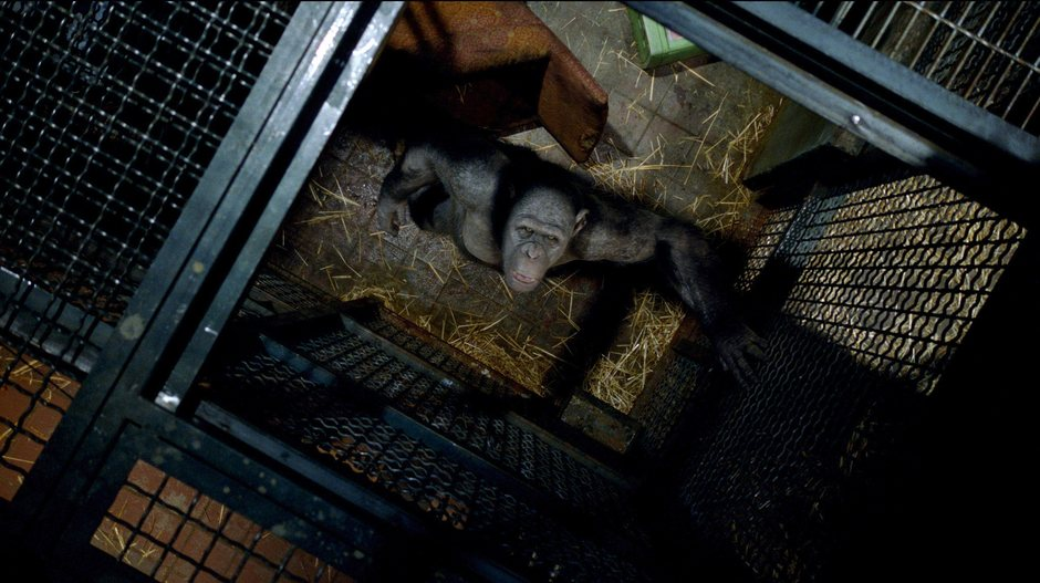 Maymunlar Cehennemi: Baslangiç : Fotograf Rupert Wyatt