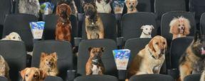 Köpek Film Festivali Başlıyor!