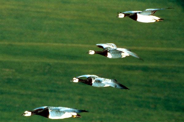 Kuşlar Kanatlı Uygarlık